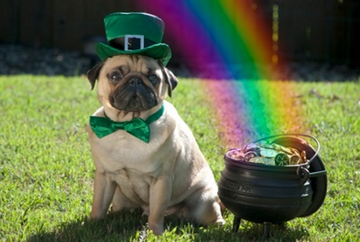 Cute Wallpaper St Pattys Day Pupppy 17 Pets Who Are Ready For St Patrick S Day Sandstone