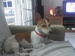 Snoopy Meditating