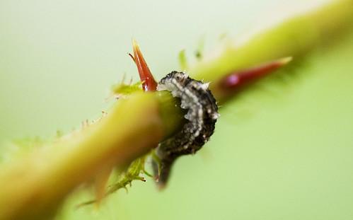 iets dat misschien bladluizen eet
