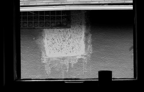 Window 4450