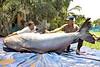 646-Pound Catfish Netted in Thailand