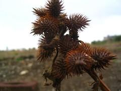 some arbit plant