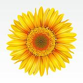 clip art of background with sunflowers
