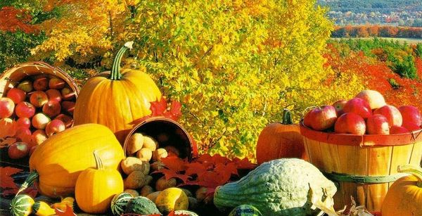 Image result for image of a harvest bounty