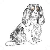 Pure Bred Cavalier King Charles Spaniel Dog Drawing Clip
