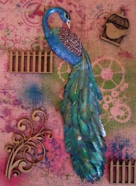 Peacock-014