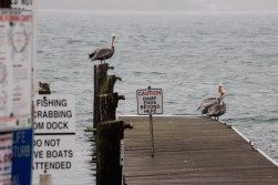 Dock-Signs