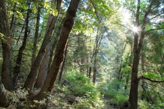 pacific-crest-trail-morning-light