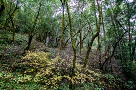 Unspoiled-Sonoma-County-2