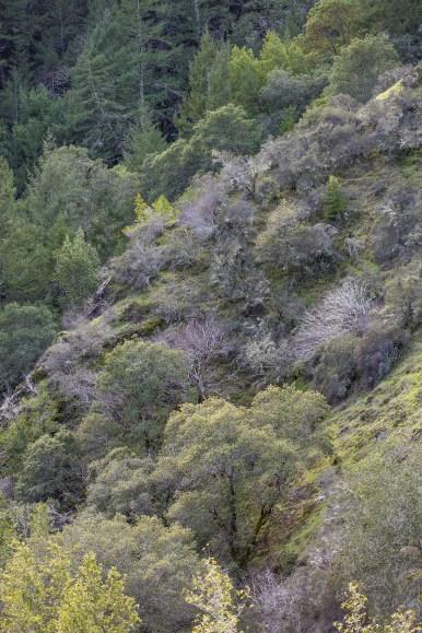 Across the Canyon, Vertical