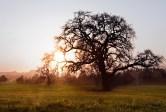 Sunset, Joe Rodota Trail