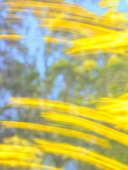 Mustard-Blossoms-in-the-Wind
