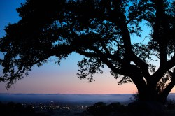 Taylor-Mountain-Oak-Silhouette
