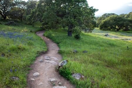 Taylor-Mountain-Trail-2