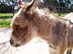 Random Donkey