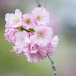It´s the season of the cherries!