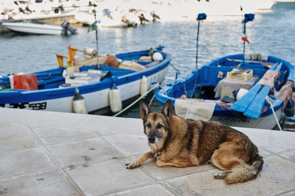 Vieste, Puglia, white town, Italia, ursula travels, my big fat italian roadtrip