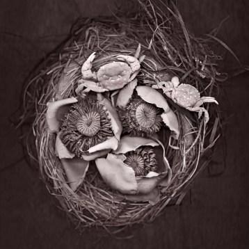 Nest Crabs · 2012 · 22 x 22 in.