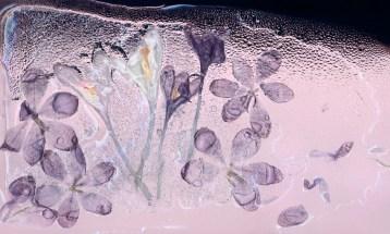 Crocus Ice · 2010 · 50 x 29 in.