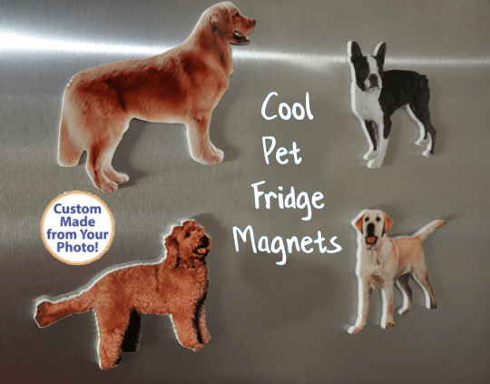 Fridge Magnets Make Great Pet Photo Gifts