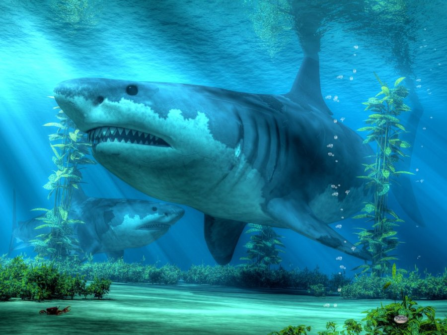 shark fish underwater best 3D