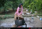 Gilan, Iran - Anbu, Pomegranate Harvest 2014 05