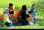 Razavi Khorasan, Iran - Mashhad, Bulbous Flowers Festival 23