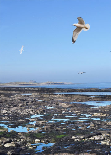 Seahouses 2