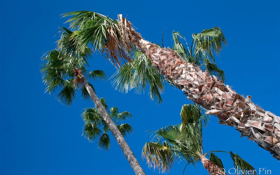 Le bleu et les palmiers…