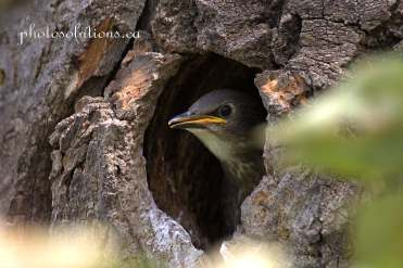 Bird in tree nest cropped wm