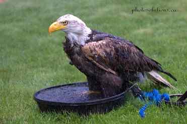 BOP Bald Eagle shower
