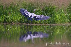 Blue Heron Lochend rd landing wm