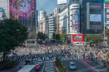 Shibuya Crossin - Tokyo - Japon.