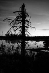 Toter, abgestorbener Baum in Kanada, Ontario. Oktober 2015 // Dead tree in Canada, Ontario. October 2015