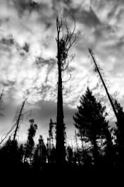 Toter, abgestorbene Bäume in Kanada, Alberta, Banff. Oktober 2015 // Dead trees in Canada, Alberta, Banff. October 2015