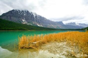 Sonnengelbes Seegras am Ufer am See im Nationalpark von Banff, Kanada, Alberta. Oktober 2015 // Yellow seas grass on the shore of a lake in the national park in Banff, Canada, Alberta. October 2015