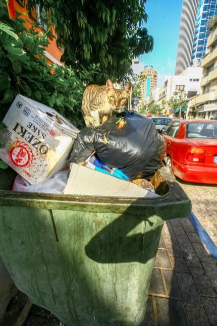 Straßenkatze auf einem Container mit Müllsaäcken in Tel Aviv, Israel. Juli 2017 // Street cat on a container filled with garbage bags in Tel Aviv, Israel. July 2017