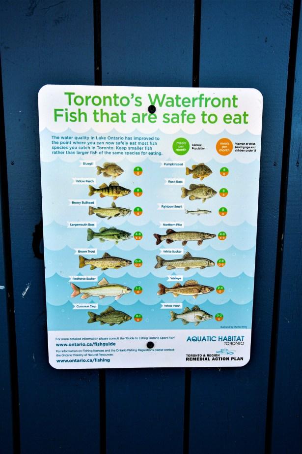 Schild mit Fischarten die aufgrund von der Wasserqualität des Ontario See's nur in begrenzter Stückzahl verspeist werden dürfen, Toronto, Kanada. Mai 2015 // Regulation sign for edible species of fish due to bad water condition of Lake Ontario, Toronto, Canada. May 2015