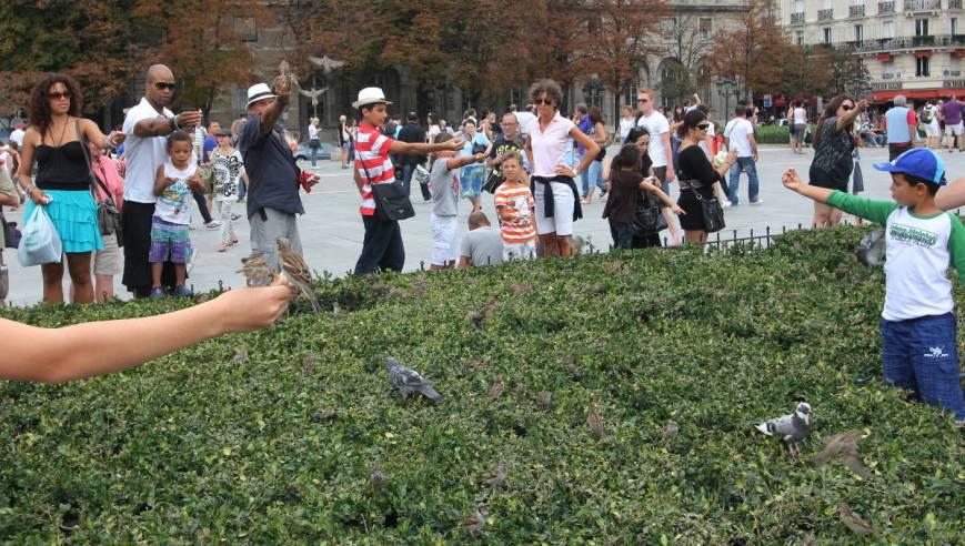 Feeding Birds at Notre Dame De Paris