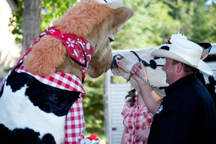 Harry the Horse (official Calgary Stampede mascot) meets the Holstein cow about to be milked.
