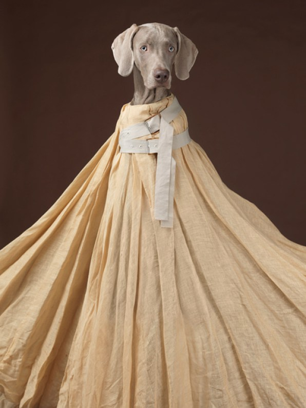 Commande Acne Studios - © William Wegman