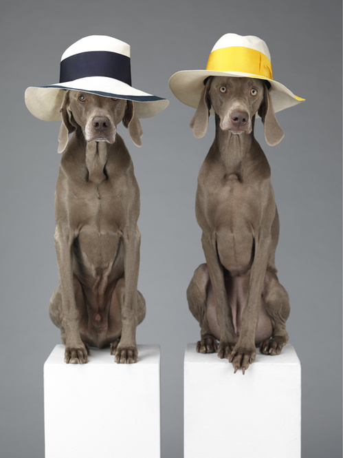 Commande Acne Studios - © William Wegman ©