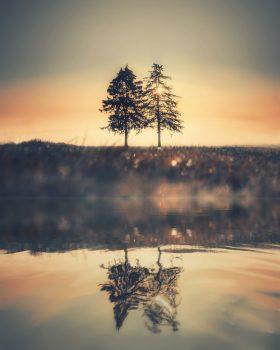 Trees are Life, Basuzilon