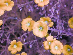 Flowers, Kate Adler