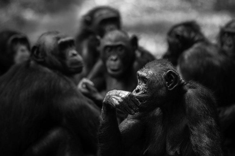 ©Dany GRAHEK - Mammifères sauvages de pleine nature