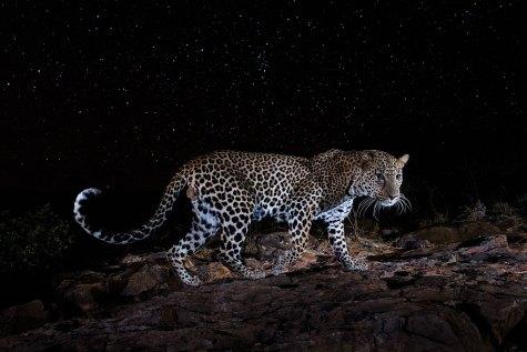 Concours Professionnel, Finaliste, Catégorie Vie animale et nature ©Will Burrard-Lucas