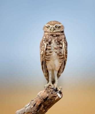 Comedy Wildlife- Anita Ross - Shhhh, I'm So Hungover It Hurts