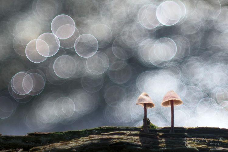 Creatieve herfstfotografie