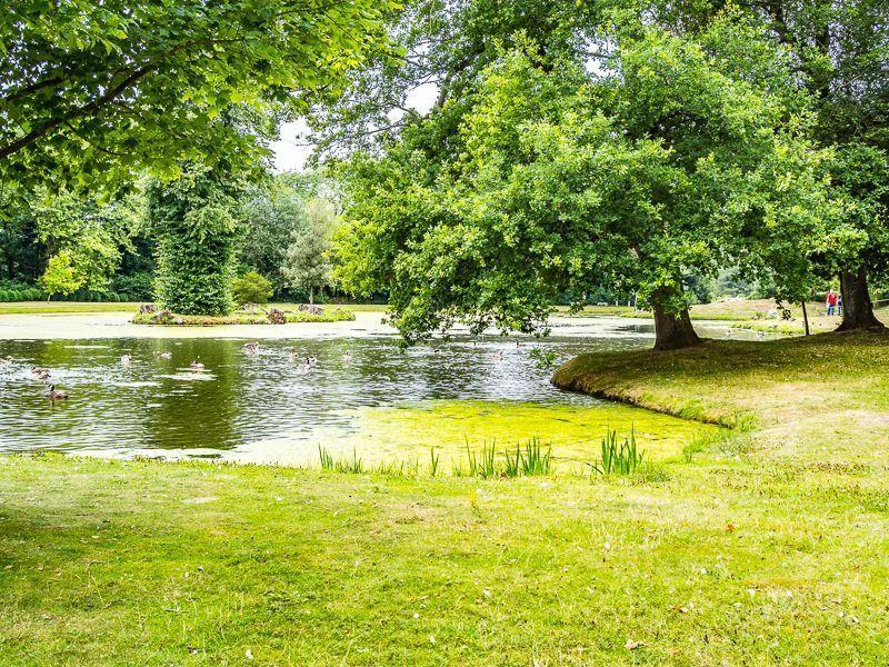 Photo Walk, Painshill  - Surrey 4