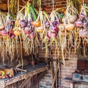 Strings of onions of various colours in a garden shed and drying. - Photo Walk UK